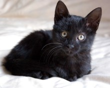 unique names for black kittens