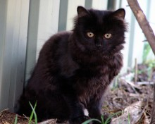 names for fluffy black kitten cross