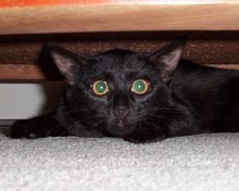pictures of cute black kittens