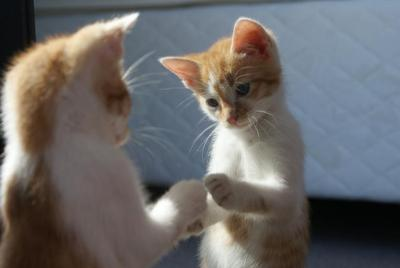 telling signs your kitty has kitten fleas: cute ginger kitten