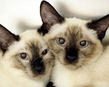 Cute Twin Girl Names For Cats