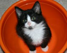 Kitten Black and White