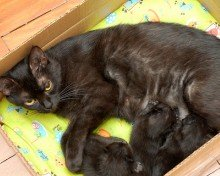 black cat names for newborns