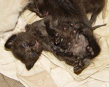 pictures of cute baby black kittens