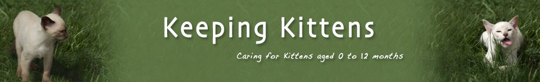 Keeping Kittens - Guide to Caring for Kittens