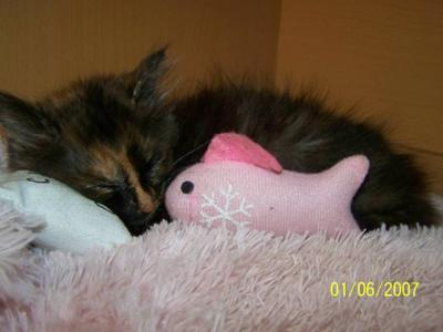Candy sleeping with her fav toy and pillow