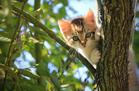 cute kitten in tree