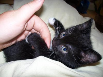 Cutest Little Baby Black Kitten