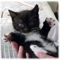 Cute Cat Names For Black And White Kittens