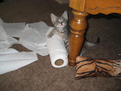 What paper towels?  I don't see a problem here!
