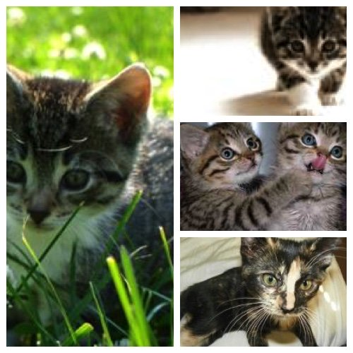 pictures of 4 kittens