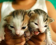Newborn Kitten Twins Photo By brookesb